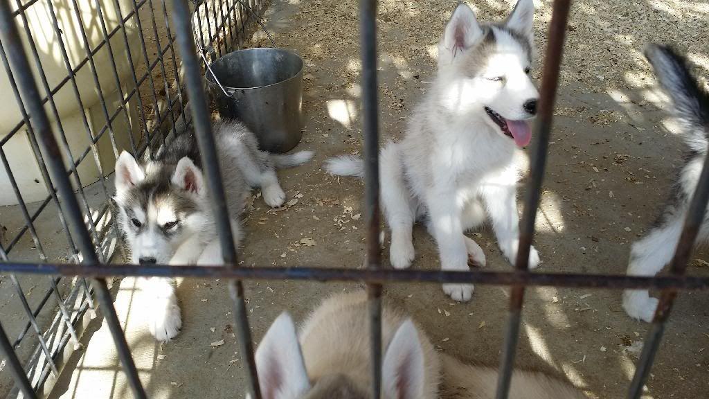 Getting a puppy, help me prepare! 20140419_165258_zpsifzy5t5o