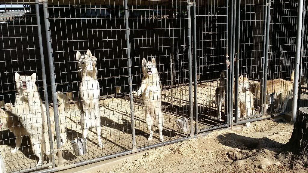 Getting a puppy, help me prepare! 20140419_170738_zpsvi4v65dj