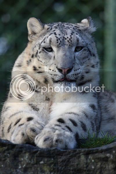Pet Demonds Profiles IMG_7024