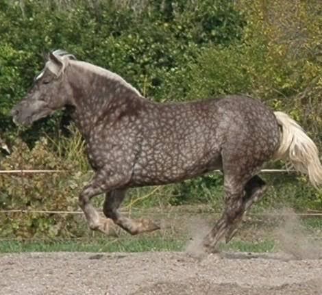 Are my mare and mule Silvers? Jecacantering