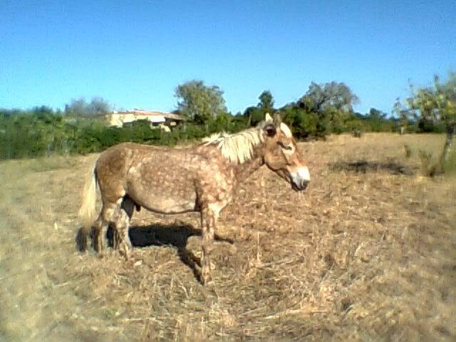 Are my mare and mule Silvers? Xato2010