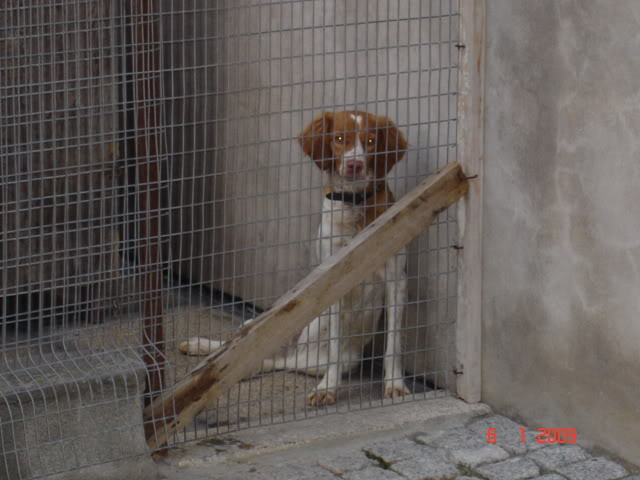 A cachorrada!!! DSC00978
