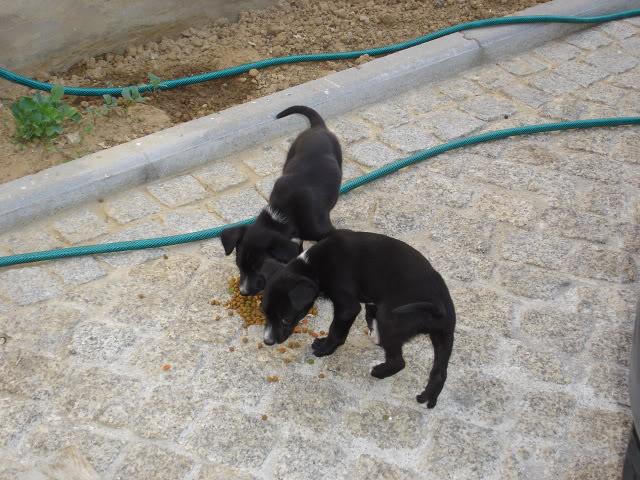 A cachorrada!!! DSC01134