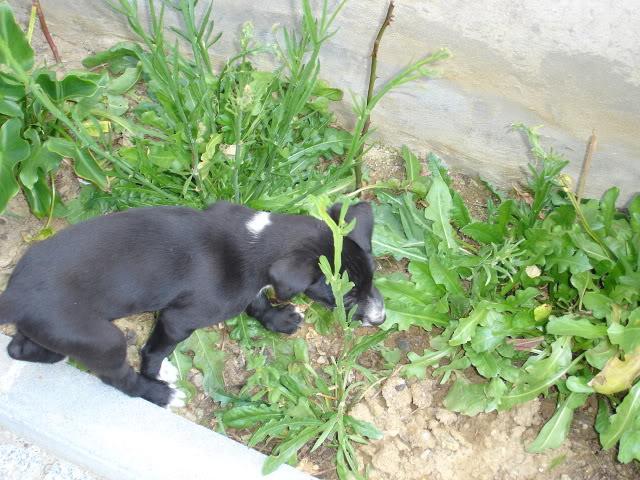 A cachorrada!!! DSC01138