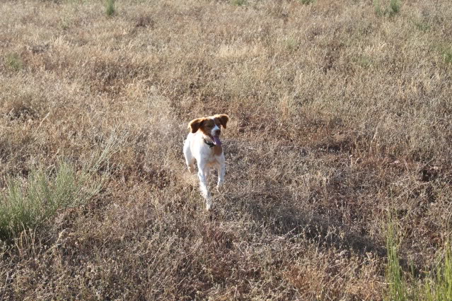 A cachorrada!!! IMG_0077