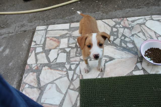 A cachorrada!!! - Página 2 IMG_1245