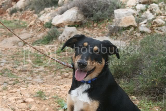 Amy 9 month old crossbreed AdorableAmy2