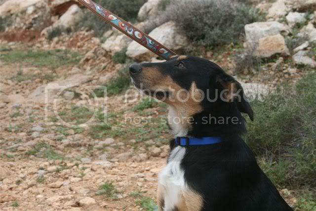 Amy 9 month old crossbreed AdorableAmy3