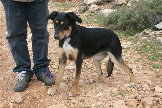 Amy 9 month old crossbreed AdorableAmy4
