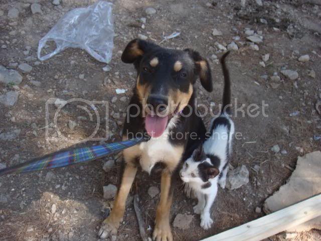 Amy 9 month old crossbreed Amy1