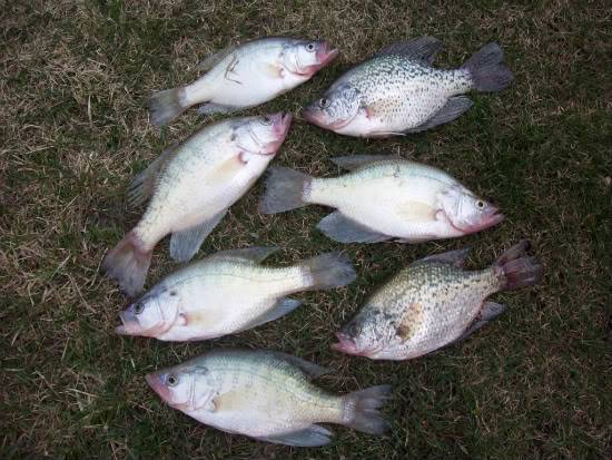 Crappie fishing 3/20/10 (Update 3/21) 100_1273