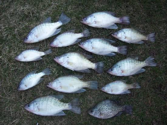 Crappie fishing 3/20/10 (Update 3/21) 100_1276
