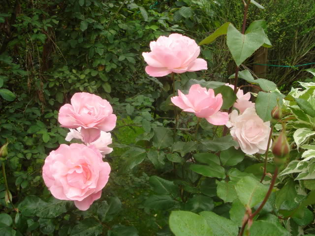 Fotografije cvijeća - Page 39 014-14