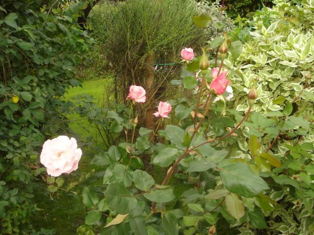 Fotografije cvijeća - Page 39 033-8