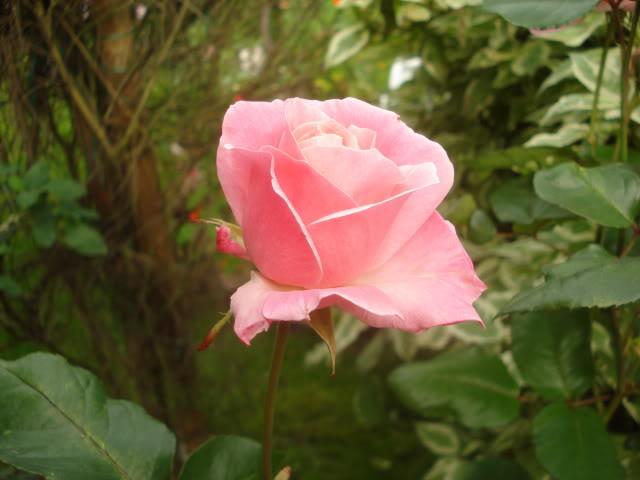 Fotografije cvijeća - Page 39 034-10