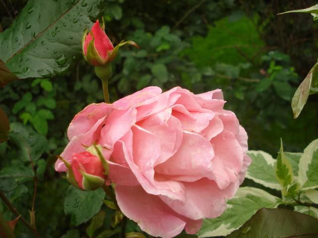 Fotografije cvijeća - Page 39 041-7