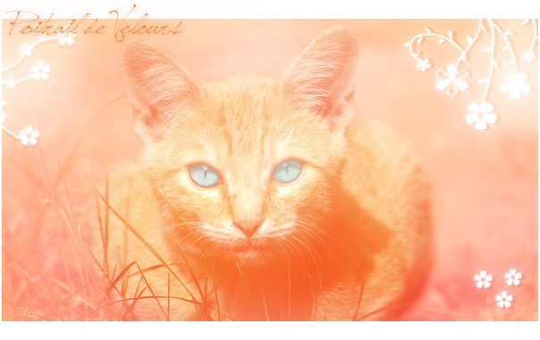 Cat's News / The First one! Poitraildevelours-1