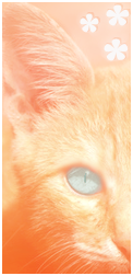 Cat's News / The First one! Poitraildeveloursav-1