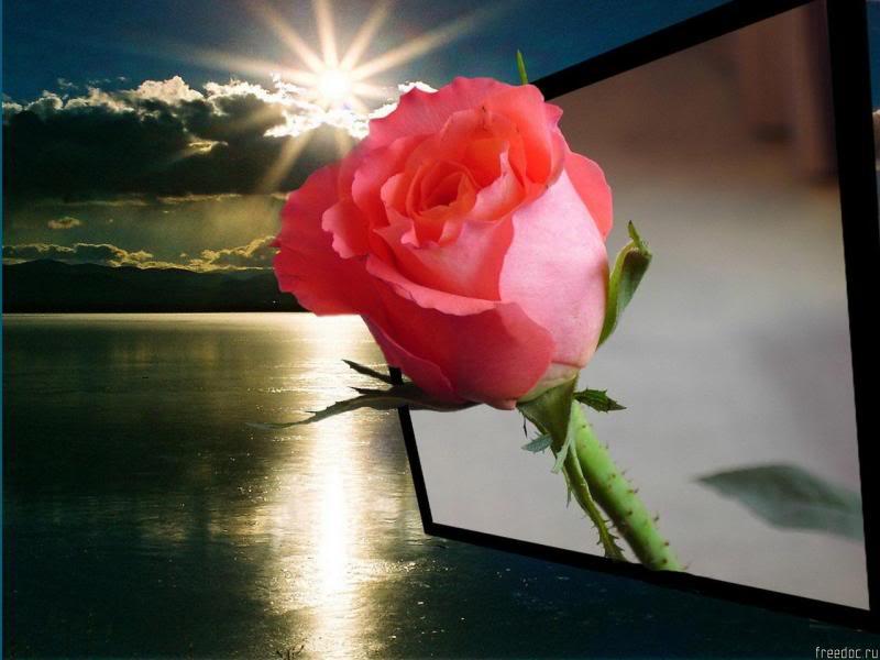 انثر خلفك زهورا .. واصبر قليلاً ترى نورا .. Freedoc_ru_47410_1280x960