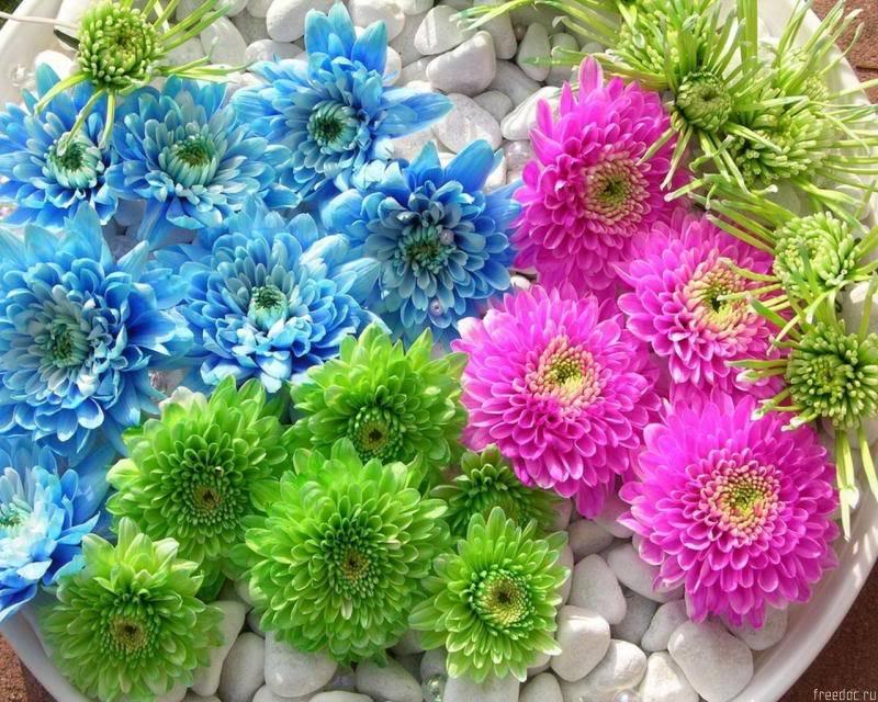 انثر خلفك زهورا .. واصبر قليلاً ترى نورا .. Freedoc_ru_47507_1280x1024