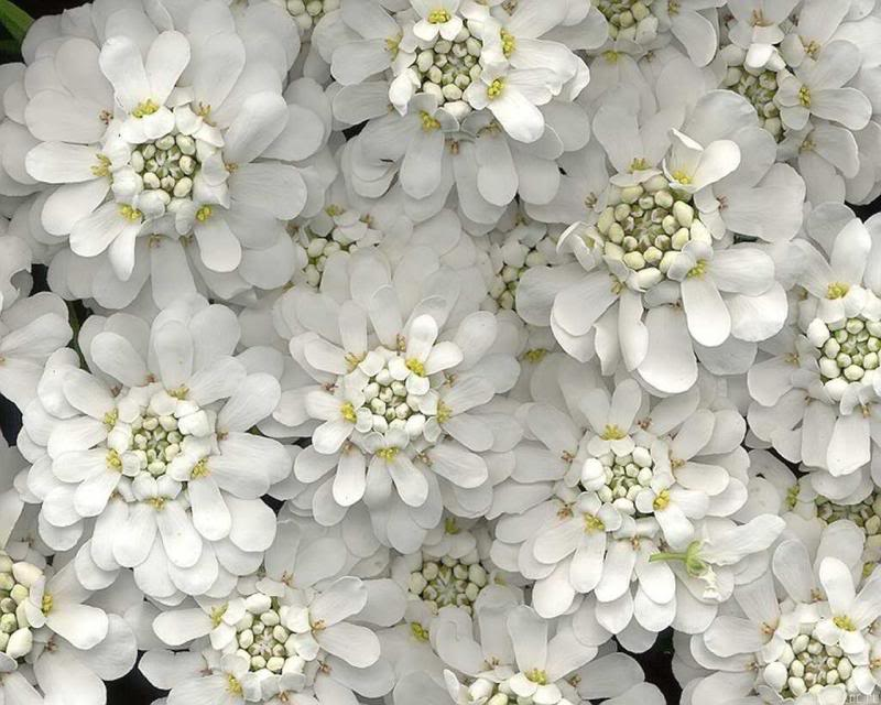 انثر خلفك زهورا .. واصبر قليلاً ترى نورا .. Freedoc_ru_47665_1280x1024