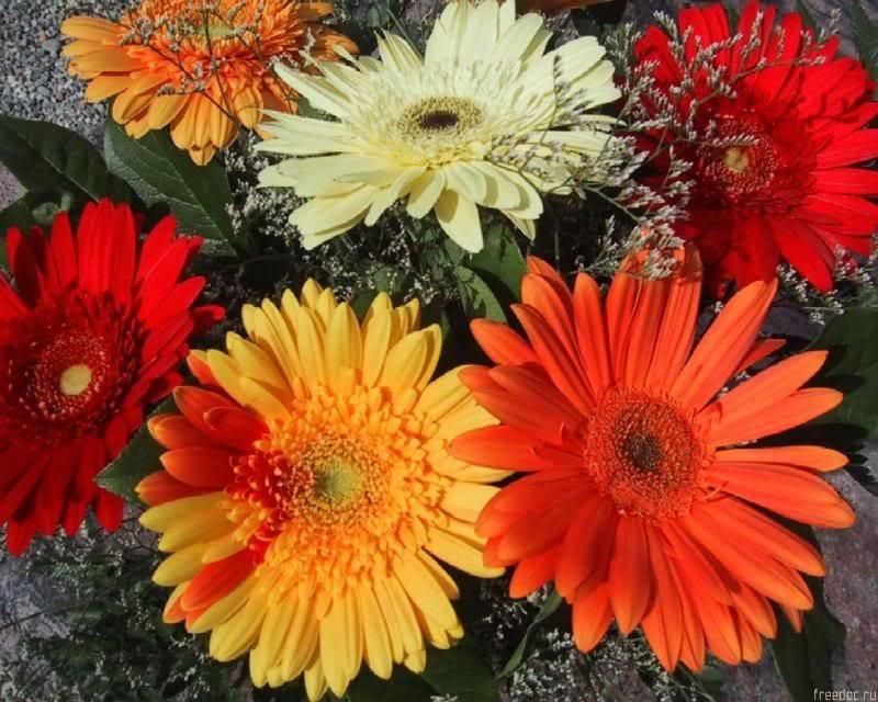 انثر خلفك زهورا .. واصبر قليلاً ترى نورا .. Freedoc_ru_47713_1280x1024