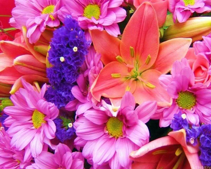 انثر خلفك زهورا .. واصبر قليلاً ترى نورا .. Freedoc_ru_47853_1280x1024