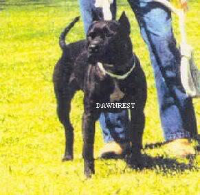 Game Dogs 2 1020boudreaux20gr20ch20glack20biter
