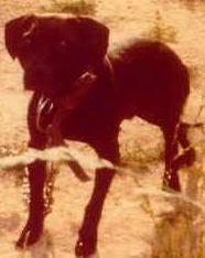 Game Dogs 2 2reddickgrchherman