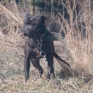 Game Dogs 2 3rastamamn20gr20ch20bronson