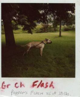 Game Dogs 2 Gr20ch20flash