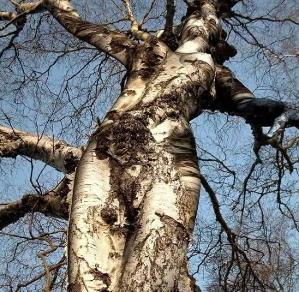 Hình ảnh vui về sự tiến hoá của loài người Tree-Goddess