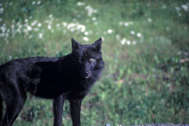 View a character sheet Black-wolf