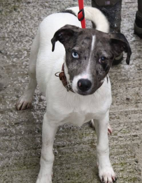Megan 5 month old X breed fostered by Four Paws Animal Rescue (South Wales) IMG_6595
