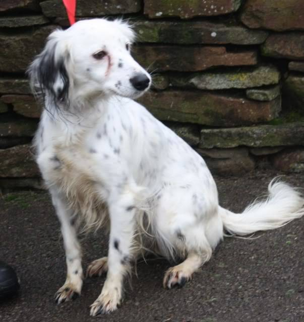Zahra a Collie Cross fostered by Four Paws Animal Rescue (South Wales) IMG_6623
