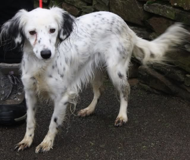 Zahra a Collie Cross fostered by Four Paws Animal Rescue (South Wales) IMG_6627