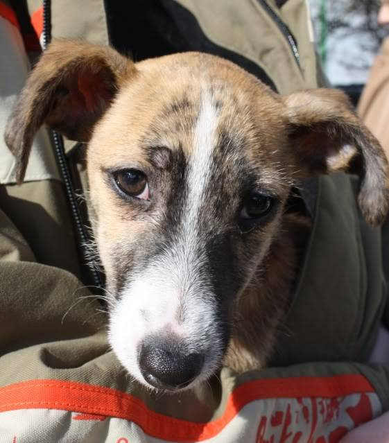 Rosie X Breed fostered by Four Paws Animal Rescue (South Wales)  IMG_6740