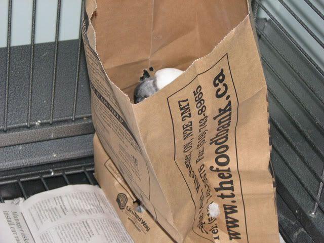 Bird in a bag Petebag