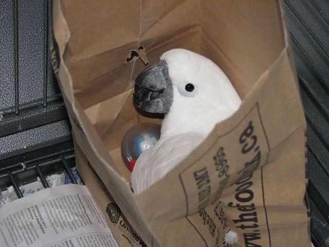 Bird in a bag Peteinbag