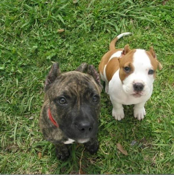 my puppies N1342798080_30099246_6026
