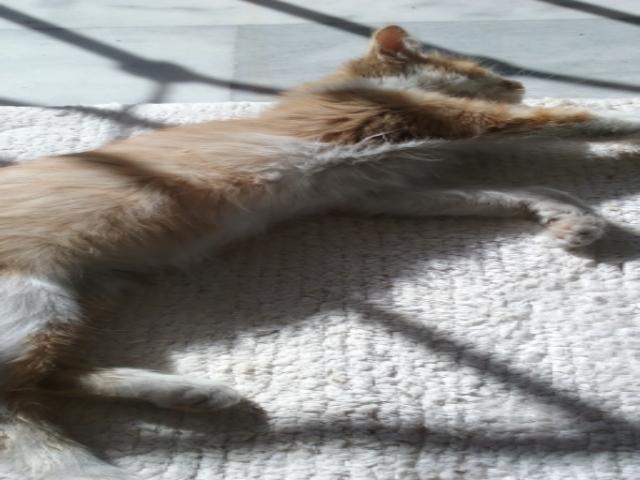 Γατάκι στην ανάρρωση ψάχνει σπίτι 7_zpsxh70qhyb