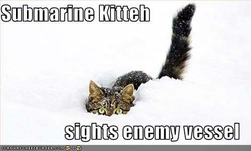TURTLES VS. KITTENS! Funny-pictures-cat-sees-enemy-vessel