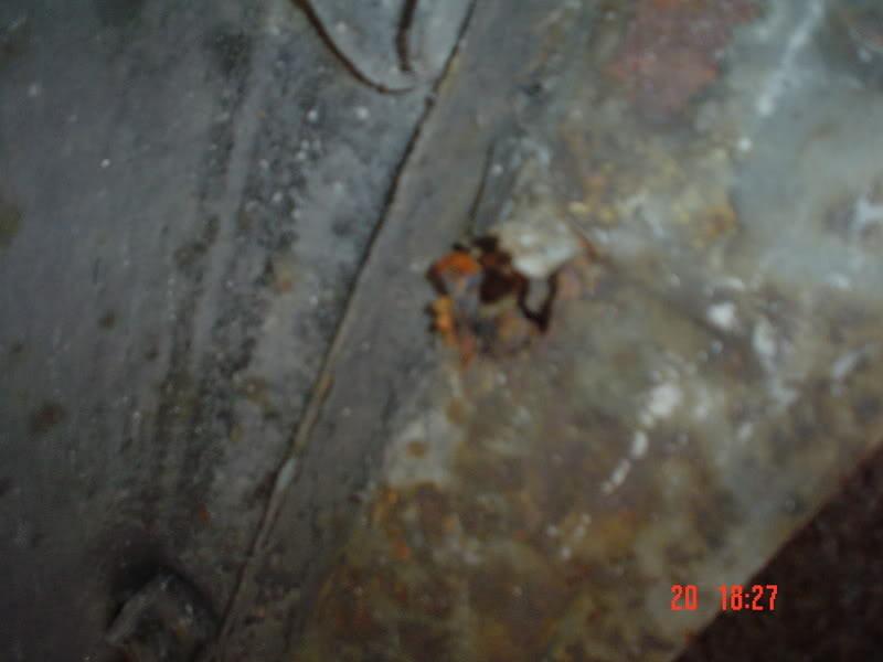 The Bug with no name as YET Thebug002