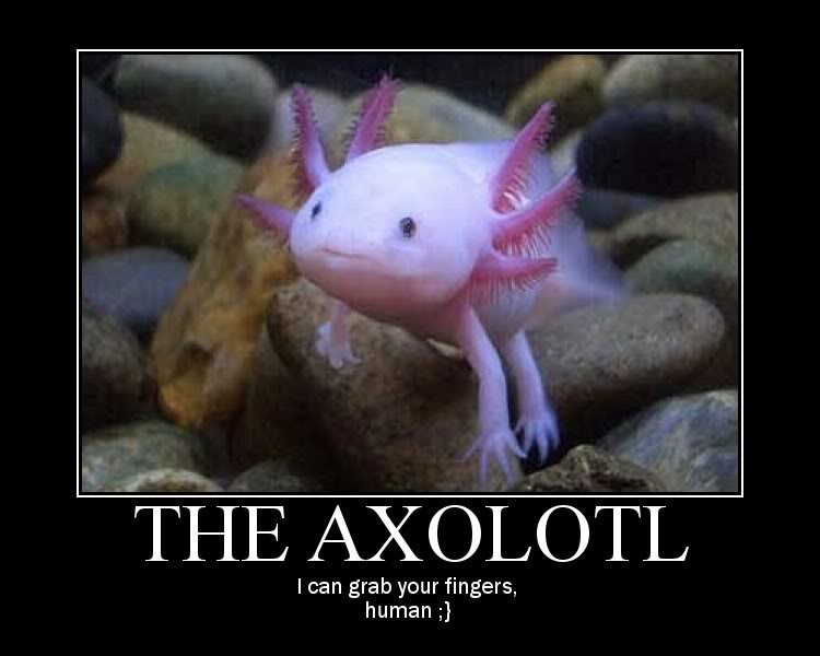Axolotls are awesome (with pictures made of awesome) Fish_Axolotl_FishWHands