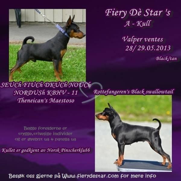 Fiery Dè Star's A kull født 28 mai 2013 Akullnorsk