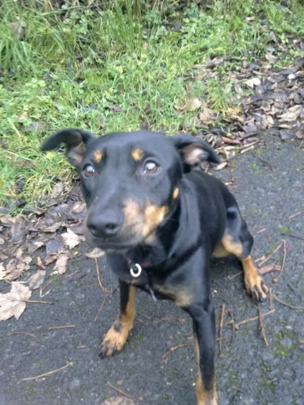 Angela - 8 month old small cross breed - Great with dogs+kids Angela15