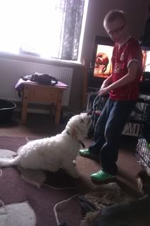Bailey - 17 month old Westie/Bichon Frise/Cavalier cross - Fostered Berkshire Bailey05-2