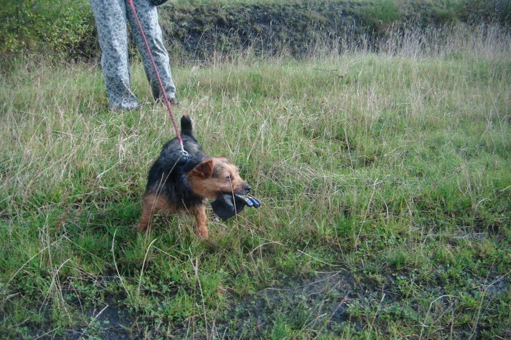 Daisy May Yorkie X Terrier - Just want a chance to shine! 2011_1019walkies0035