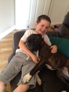 Diesel - 3 year old SBT - Perfect family dog (Fostered in Oxon) Diesel01