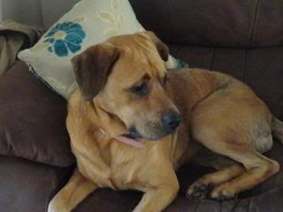 Ella - Beautiful 2 year old cross breed girl - In Oxon Ella01-1